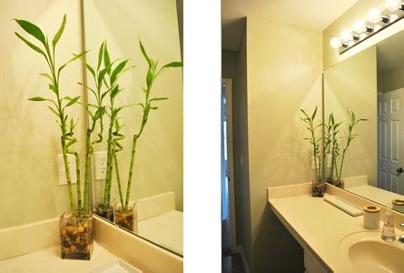 Plants For Windowless Bathroom by I Just Bought This For My Bamboo Room Bathroom