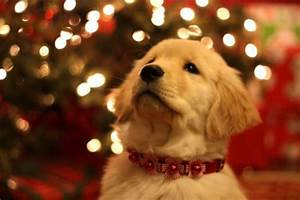 15 Most Beautiful Christmas Dog Photos