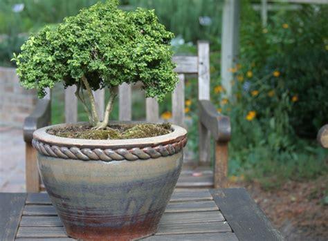 winterharte kuebelpflanzen das gruen im garten erhalten