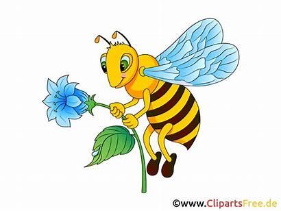 Biene Clip Grafik Bild Clipart Gratis Bienen