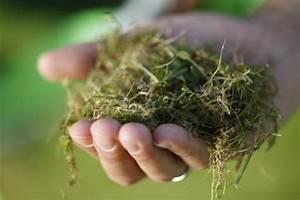 Spritzmittel Gegen Unkraut Im Rasen : rasen anlegen pflege und tipps mein sch ner garten ~ Michelbontemps.com Haus und Dekorationen