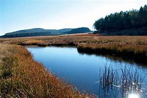 5 Things You Should Know About South Africa U0026 39 S Wetlands