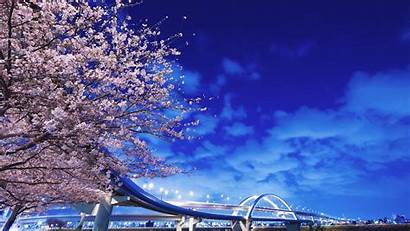 Sakura Wallpapers Japan Bridge Hokkaido Background