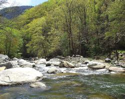 bat cave nc cabins vacation rentals and visitor guide