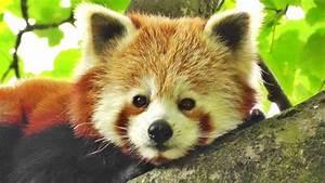 The World's C... Cute Animals