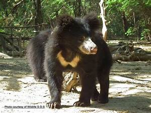 The Eight  8  Bear Species Of The World