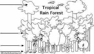 Label Tropical Rainforest Strata Printout