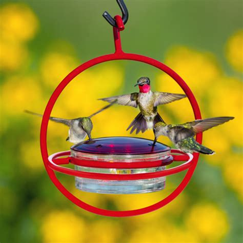 when to hang hummingbird feeders duncraft com hanging sphere hummingbird feeder with red perch