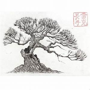 bonsai print drawing With wiring pine bonsai