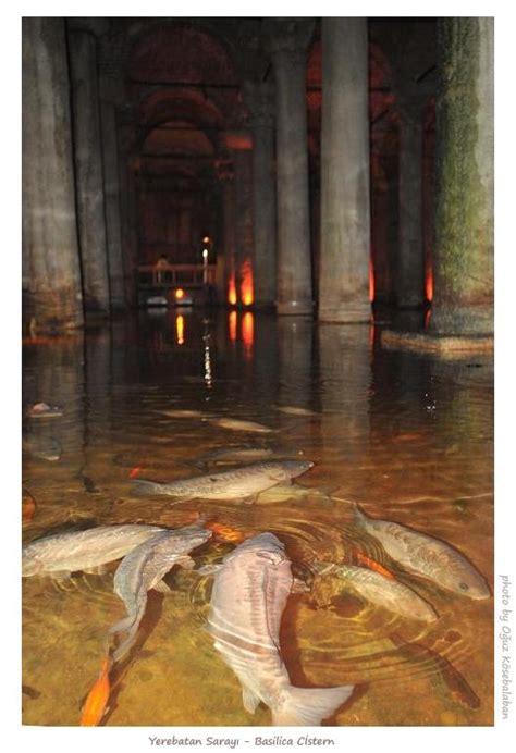 basilica cistern carps  photo  istanbul marmara