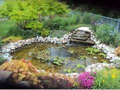 Water Garden Backyard Water Garden