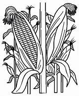 Corn Coloring Field Pages Drawing Cornstalk Plant Indian Cornfield Stalk Vegetables Google Stalks Fruits Printable рисунок Sheet Fields Template Drawings sketch template