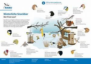 Vögel Im Winter Kindergarten : v gel im winter richtig f ttern nabu leipzig ~ Whattoseeinmadrid.com Haus und Dekorationen