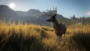 TheHunter Call Of The Wild On PS4 Official PlayStation