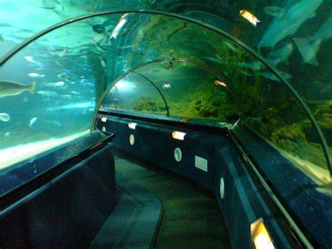 underwater world sea aquarium