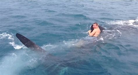 Banana Boat Ride Shark Attack by Incredibly Peaceful Encounters With Sharks On