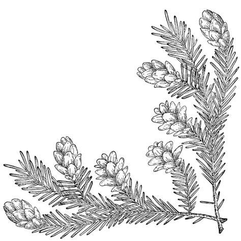 pine cone corner   clipart
