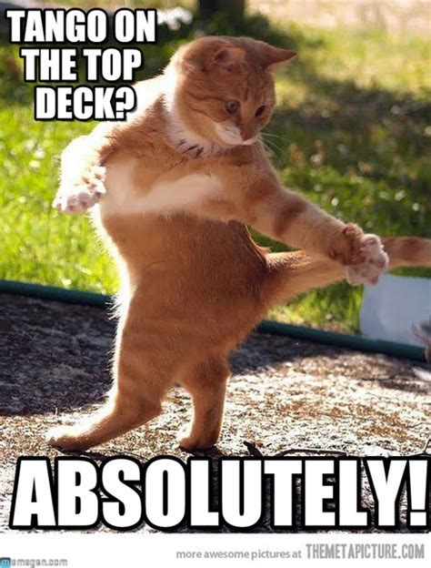 Dancing Cat Meme - tango on the top deck dancing cat meme on memegen