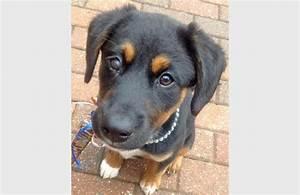 Cutest Breed Of Dog - Dog Breeds