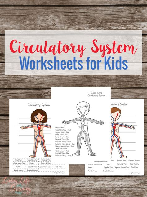 circulatory worksheets  kids  homeschool deals
