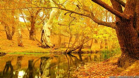 Autumn Tree Wallpapers  Wallpaper Cave