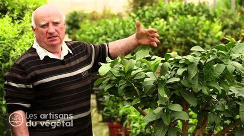 taille d un bureau taille d un oranger en pot 28 images mini agrumes pot