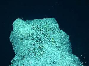 Extreme shrimp may hold clues to alien life