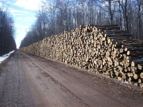 how much wood is in a cord timber sales price county wi official website
