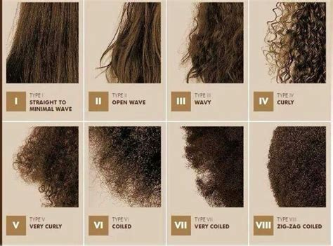 Different Types Of Hair by Different Types Of Hair Thirsty Curlz Hair