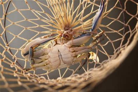 crabbing hot spots  delaware usa today