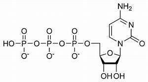 Cytidine Triphosphate