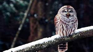 Owl Photos, Download Owl Wallpapers, Download Free Owl ...