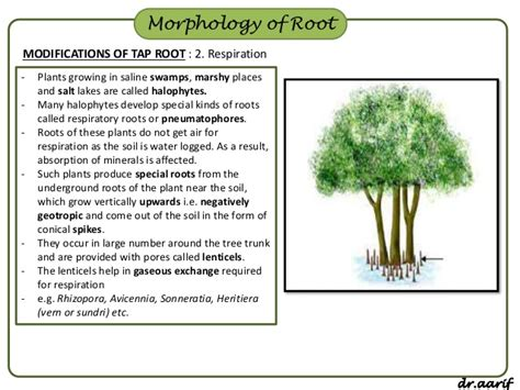 Names Of Modified Roots by Twelve 56 Modified Root Of A Plant Exles Investingbb
