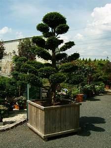 bonsai baum garten rheumricom With französischer balkon mit garten bonsai baum