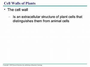 Cell  Ppt  Lecturers For Biology 7th Edition Lecturers By