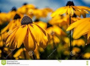 Gelbe Sommerblumen Mehrjährig : gelbe sommerblumen im garten stockfoto bild von herbst best ndig 63576796 ~ Frokenaadalensverden.com Haus und Dekorationen