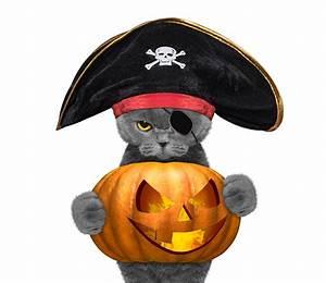 Weißer Wurm Katze : bilder von katze piraten der hut k rbisse halloween tiere wei er ~ Markanthonyermac.com Haus und Dekorationen