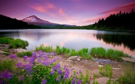 [46+] Beautiful Nature Wallpapers HD on WallpaperSafari