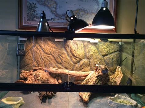 bearded dragon basking light using 100w powersun basking area not enough