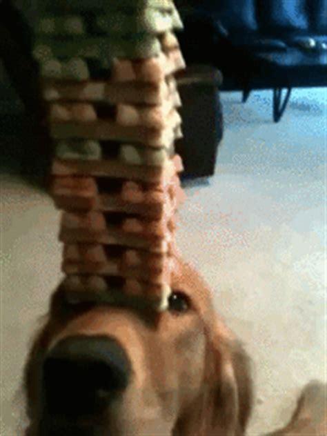 dog balancing treats  nose meme guy