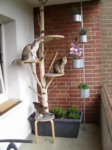 rasen auf balkon fr katze rasenmagie mein balkon wird zur With französischer balkon mit katzen im garten verscheuchen
