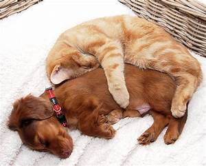 11 Cats Who Can't Deny Their Love For Dogs