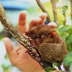 26 best images ... Cute Lemur Quotes