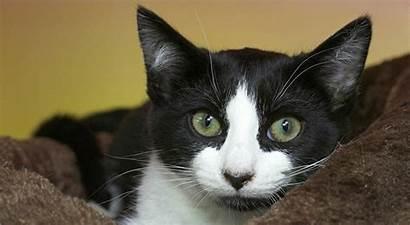Tuxedo Cat Cats Kittens Happy Facts Pattern