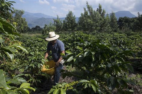 The new discount codes are constantly. Drought And Climate Change Are Forcing Young Guatemalans To Flee To The U.S. | HuffPost