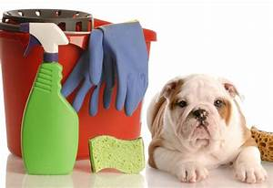 tips for keeping your house clean with dogs With dog cleaning house