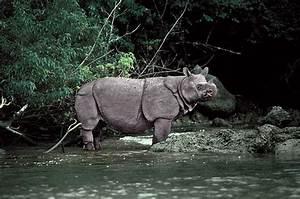 If we wish to save the Javan rhinoceros, we must work to ...