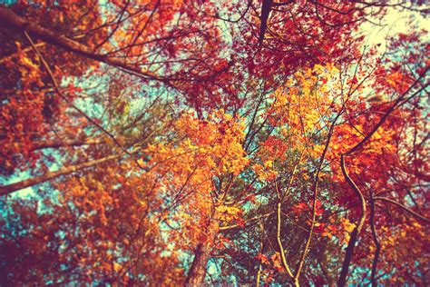 Aesthetic Fall Themed Desktop Backgrounds by Autumn Wallpapers 1080p With High Definition