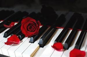PianoRose 02 By Kazuaka On DeviantArt