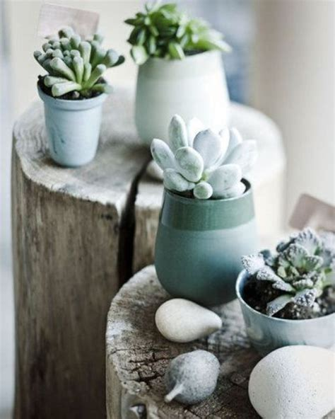 How To Display Succulents: 30 Cute Examples   DigsDigs